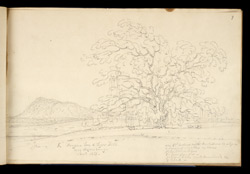Banyan Tree & Tiger Hill near Hazaribagh. Nov. 1813